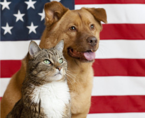 Dog Cat USA